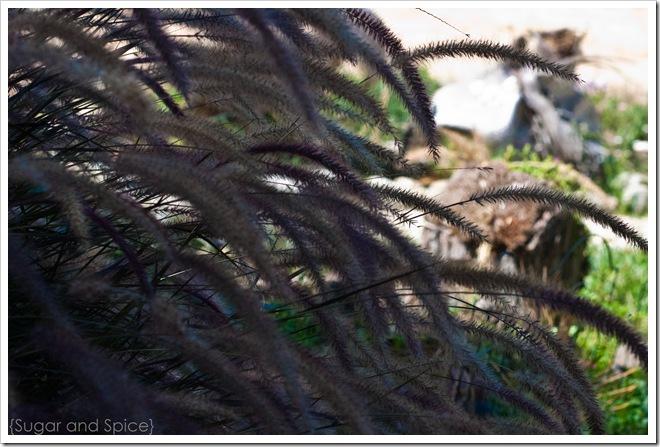 Sept St Pauls 2010 ENGE-073