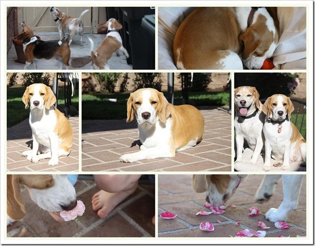 2010-09-21 september lulu bounce dogs